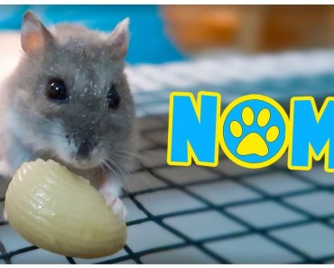 Adorable Hamsters & Mouse Eating Pasta! - adorable hamsters mouse eating pasta