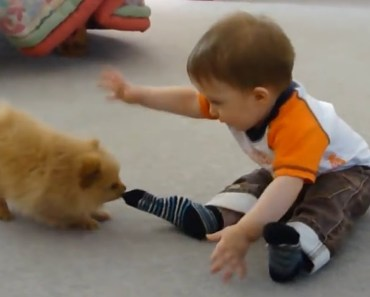 Best Of Cute Pomeranian Puppies & Baby and Kids Playing Together Funny Dogs 2018 - best of cute pomeranian puppies baby and kids playing together funny dogs 2018