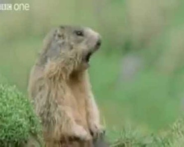 Best Of Funny Talking Animals - best of funny talking animals