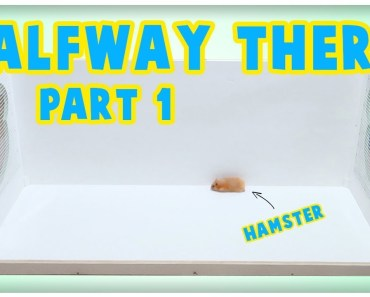 """Building A New Hamster Cage Vlog 