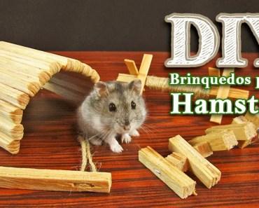 DIY Brinquedos para hamsters roerem - diy brinquedos para hamsters roerem