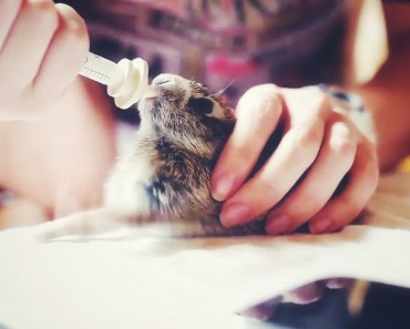 Funny Bunny Rabbits Videos Compilation - funny bunny rabbits videos compilation