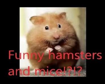 funny hamster and mice!! - funny hamster and mice