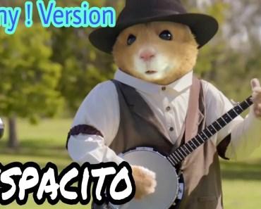 Funny hamster ! Despacito song ! Funny version - funny hamster despacito song funny version
