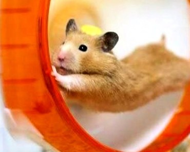 Funny Hamsters Videos Compilation #2 | Cute And Funniest Hamster - funny hamsters videos compilation 2 cute and funniest hamster