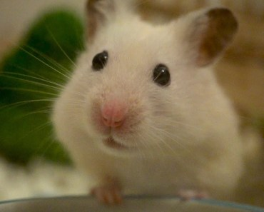 Hamster life in slow motion - hamster life in slow motion
