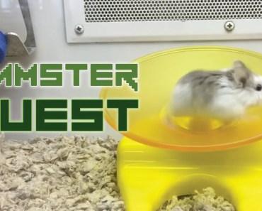 Hamster Quest - hamster quest