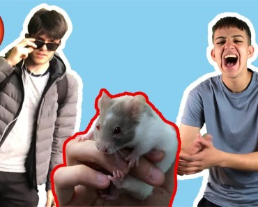 I BOUGHT MY FRIEND A HAMSTER (GONE WRONG) - i bought my friend a hamster gone wrong