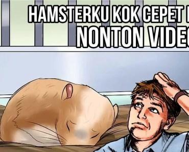 Kenapa Hamster Cepat Mati? (Baca Description dulu) - kenapa hamster cepat mati baca description dulu