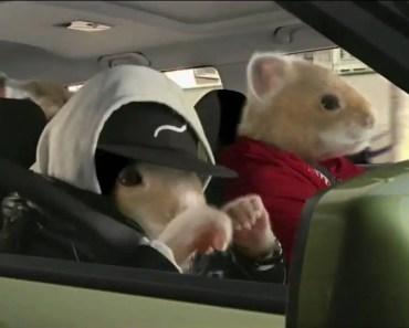 "Kia Motors ""Hamster Rap"" 2010 Commercial - kia motors hamster rap 2010 commercial"