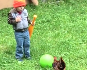 Kids vs roosters - Funny rooster chasing compilation - kids vs roosters funny rooster chasing compilation