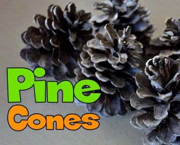 SANITISING PINE CONES FOR RABBITS & GUINEA PIGS - sanitising pine cones for rabbits guinea pigs