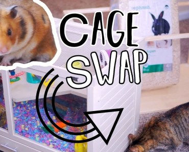 Setting Up My Hamster Cage | Cage Swap - setting up my hamster cage cage swap