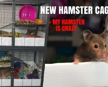 SETTING UP MY NEW HAMSTER CAGES! + my hamster is crazy - setting up my new hamster cages my hamster is crazy