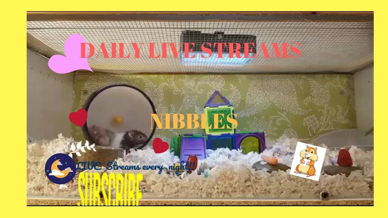 The Best of Nibble's LIVE STREAM- Original Cage theme/ Cute