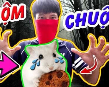 Tony | Đi Ăn Trộm Chuột Trong Cửa Hàng Hamster Của Thằng Bạn - Steal 3 Hamsters - tony di an trom chuot trong cua hang hamster cua thang ban steal 3 hamsters