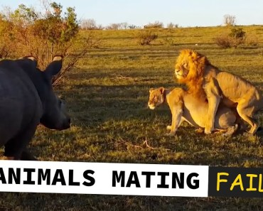 TOP 10 ANIMALS MATING FAILS * TRY NOT TO LAUGH * - top 10 animals mating fails try not to laugh