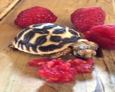 Turtles and chickens and hamsters oh my! - turtles and chickens and hamsters oh my