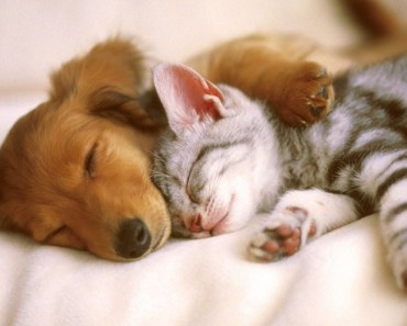 When Cats And Dogs Become Best Friends! So Cute! - when cats and dogs become best friends so cute
