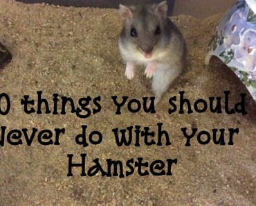 10 Things You Should Never Do With Your Hamster - 10 things you should never do with your hamster