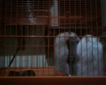funny hamster - 1528389653 funny hamster