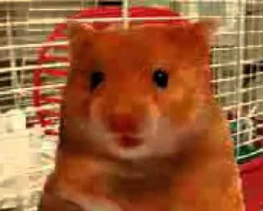 Asshole hamster.3gp - asshole hamster 3gp