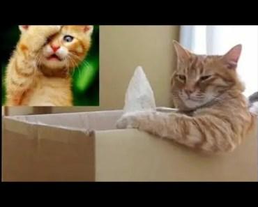 Cats Are Liquid |Top Funny Cat Videos Compilation [BEST OF] - Cute Animals - cats are liquid top funny cat videos compilation best of cute animals