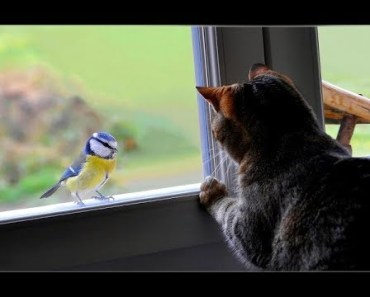 Cats Reacting To Birds - Cutest Animal Videos Compilation 2018 [BEST OF] - cats reacting to birds cutest animal videos compilation 2018 best of
