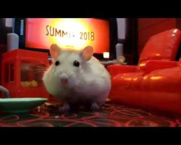 Cute Hamster Goes To see The Incredibles 2 [cute Hamster vid] - cute hamster goes to see the incredibles 2 cute hamster vid