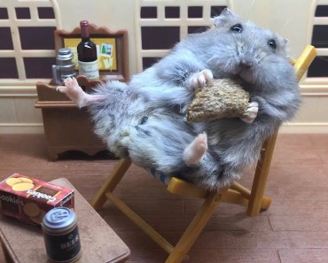 Cute Hamster TV Dinner - cute hamster tv dinner
