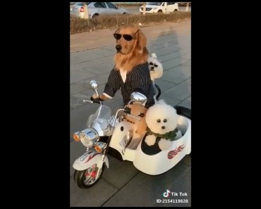 Funny Adorable & Cute Animal-Compilation 2018 (7) - funny adorable cute animal compilation 2018 7