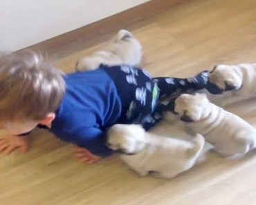 Funny And Cute Kittens And Puppies Chasing Kids To Play! - funny and cute kittens and puppies chasing kids to play