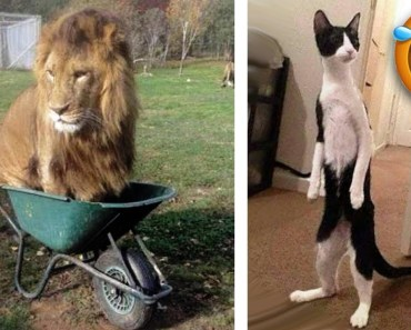 Funny Animals Acting Like Humans! LOLZ - funny animals acting like humans lolz