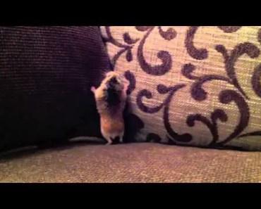 Funny Hamster Georgie - funny hamster georgie