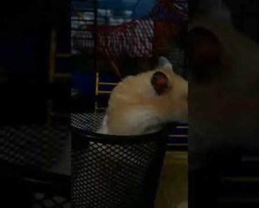 Funny hamster1 - funny hamster1