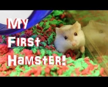 GETTING A HAMSTER! - getting a hamster