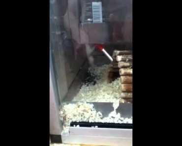 Hamster on drugs - hamster on drugs
