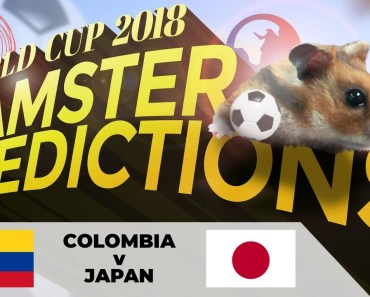 Hamster World Cup 'Predictions': Colombia v Japan - hamster world cup predictions colombia v japan