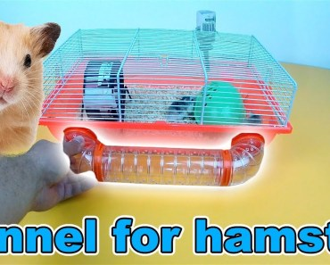 How to make TUNNEL for HAMSTER - Creative Corner | Hamster DIY | Small pet hacks | Homemade Hamster - how to make tunnel for hamster creative corner hamster diy small pet hacks homemade hamster