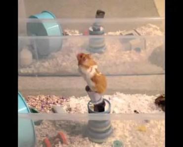 Jumping Hamster - jumping hamster