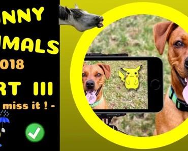 Kurze Tiervideos 3 -- funny animals part III -- ! short and funny ! -- 2018 by SirEvans - kurze tiervideos 3 funny animals part iii short and funny 2018 by sirevans