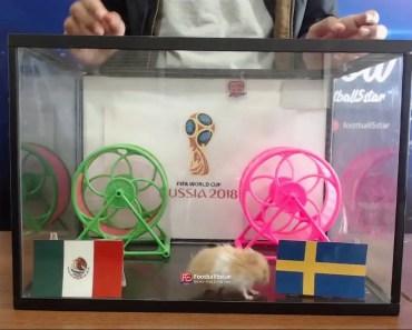 Prediksi Mexico vs Swedia bersama PO si hamster - prediksi mexico vs swedia bersama po si hamster