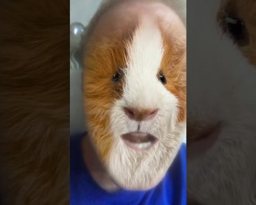 the funny hamster - the funny hamster