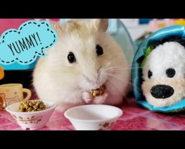 Tiny Hamster Has A Sleepover [Cute Pet Vid] - tiny hamster has a sleepover cute pet vid