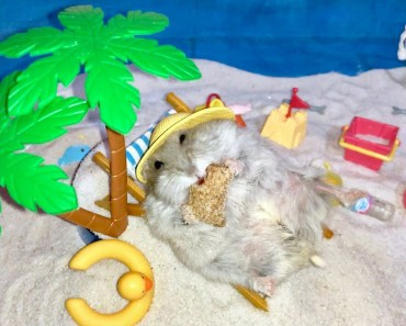 Unboxing YouTube Silver Award (100k subscribers) - Hamster beach vacation - unboxing youtube silver award 100k subscribers hamster beach vacation