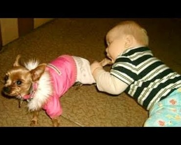 Wanna SCREAM WITH LAUGHTER? - Funny KIDS vs PETS VIDEOS will take care of this! - wanna scream with laughter funny kids vs pets videos will take care of this