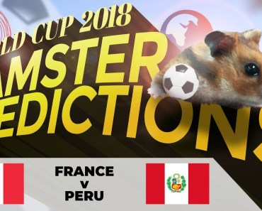 World Cup 2018 Hamster 'Predictions': France v Peru - world cup 2018 hamster predictions france v peru