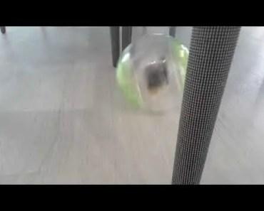 Funny hamster - 1531649880 funny hamster