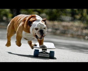 Best Funny Puppy On Slide of All Time-A Funny Dogs Video - best funny puppy on slide of all time a funny dogs video
