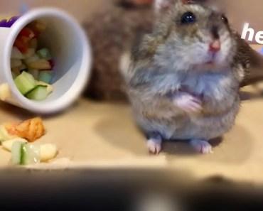 Candlelit Dinner For My Hamster - candlelit dinner for my hamster